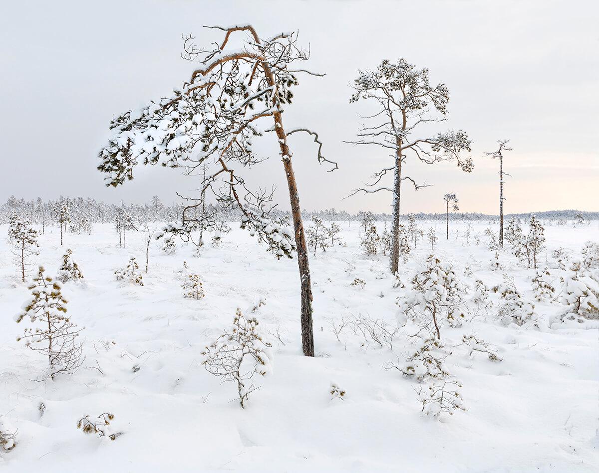 Lintusuo Tyrnävällä luontokuvaaja Mika Honkalinnan kuvaamana.
